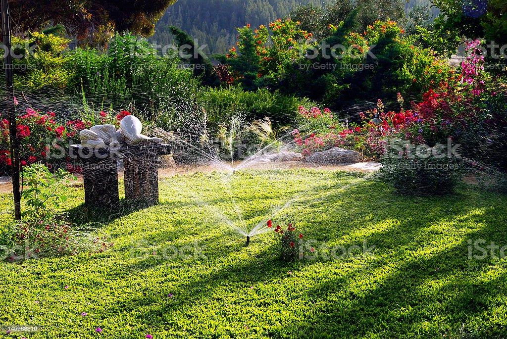 my garden royalty-free stock photo