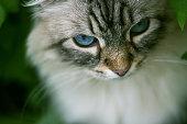 My gorgeous cat