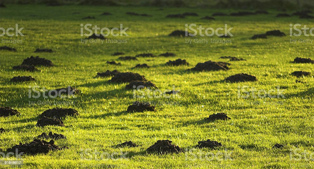 My Lawn - bad luck! stock photo