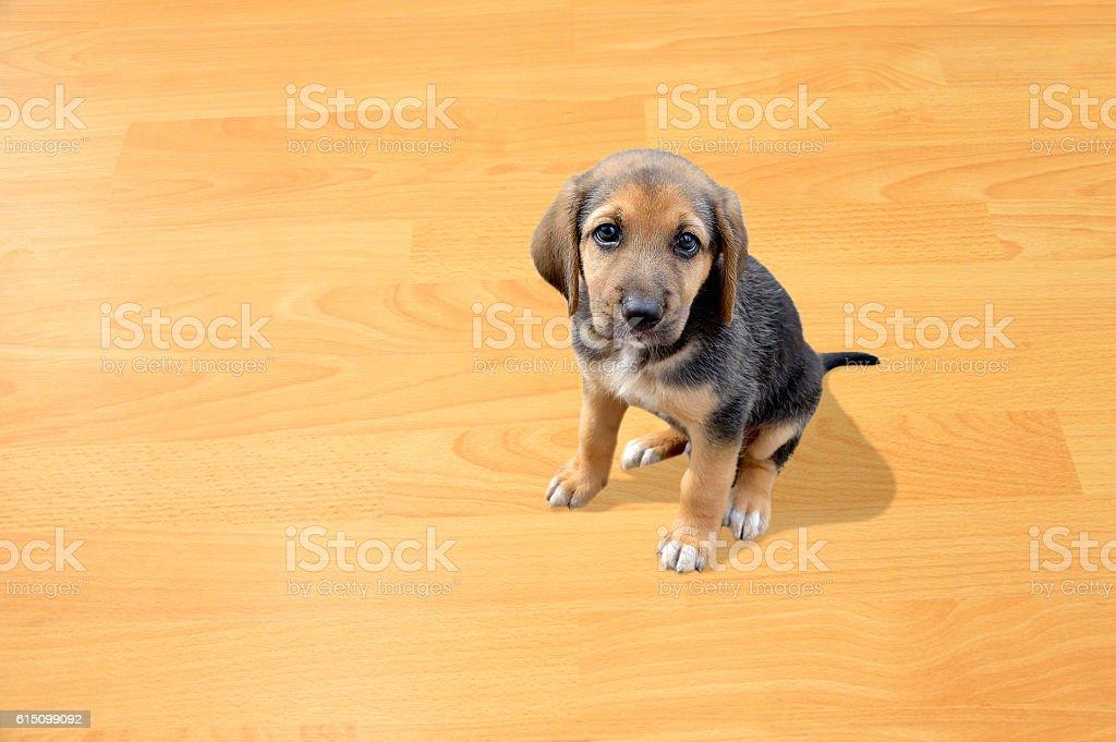 my little puppy stock photo
