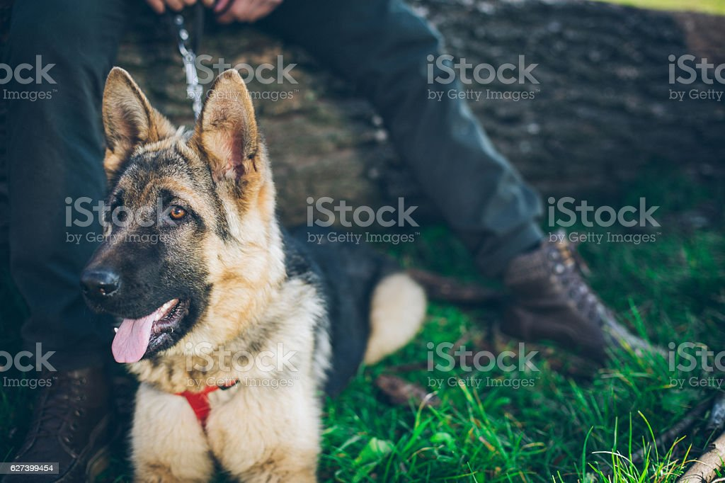 My lovely dog stock photo