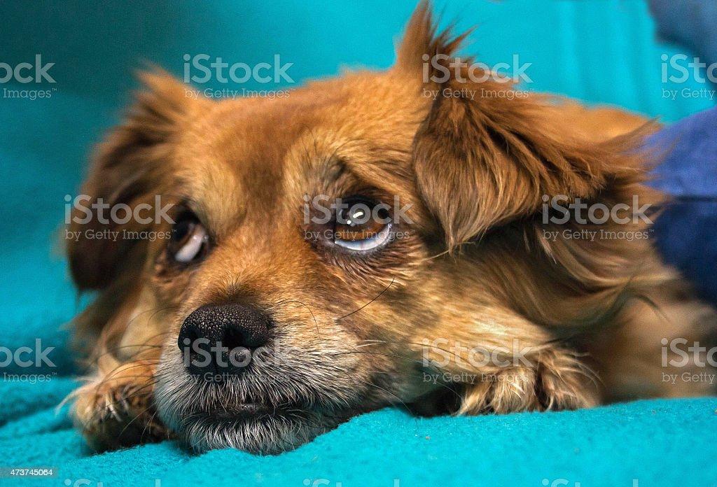 マイ puppie ロイヤリティフリーストックフォト