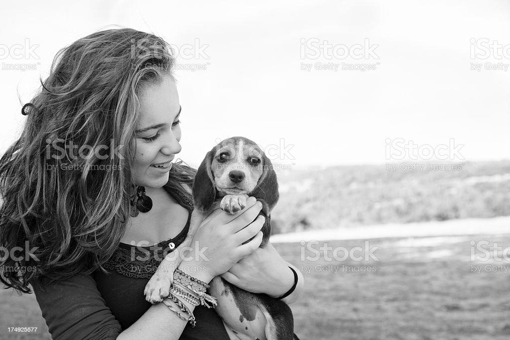 My sweet beagle puppy royalty-free stock photo