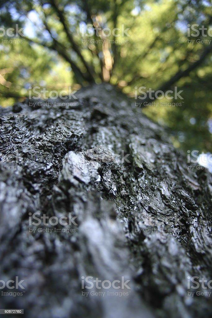 My tree - Shallow DOF royalty-free stock photo
