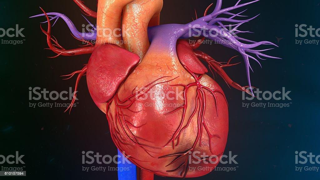 Myocardial Infarction stock photo