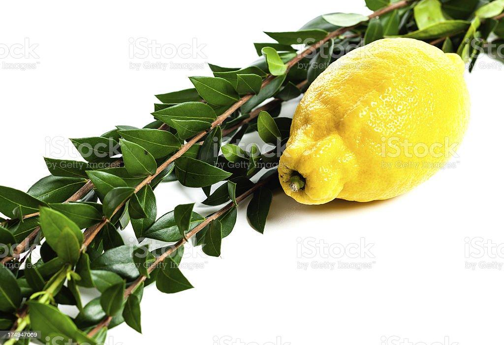 Myrtle and lemon royalty-free stock photo