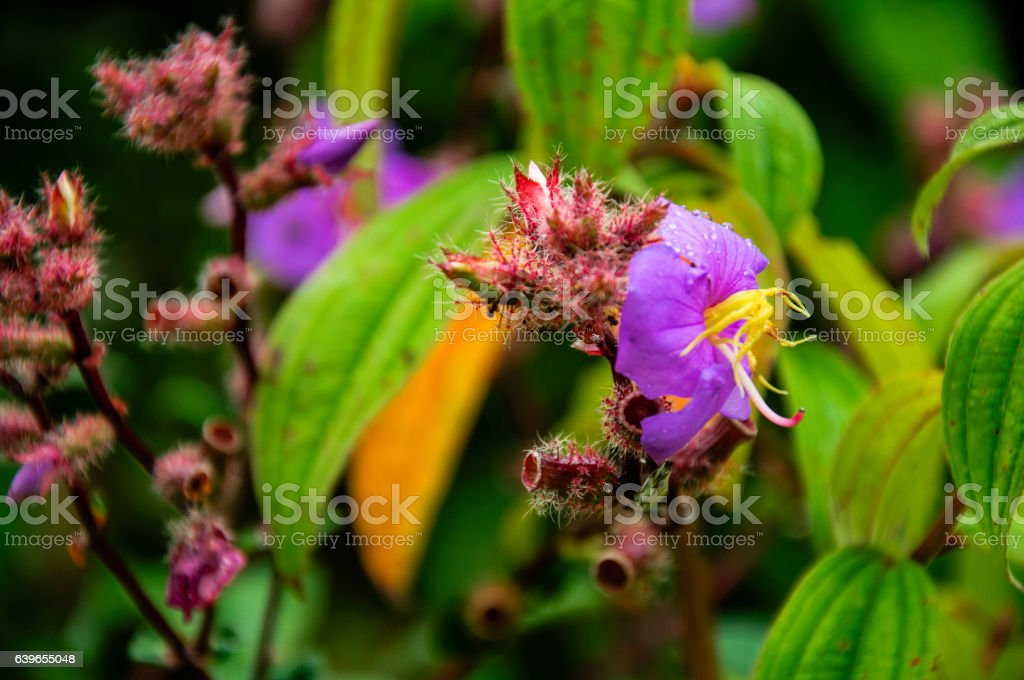 Myrtle flowers stock photo