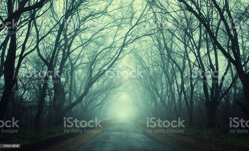 Mysterious dark autumn forest in green fog with road, trees stock photo