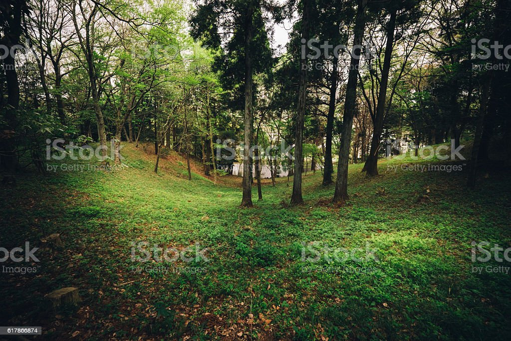 Mysterious dark forest in japan stock photo