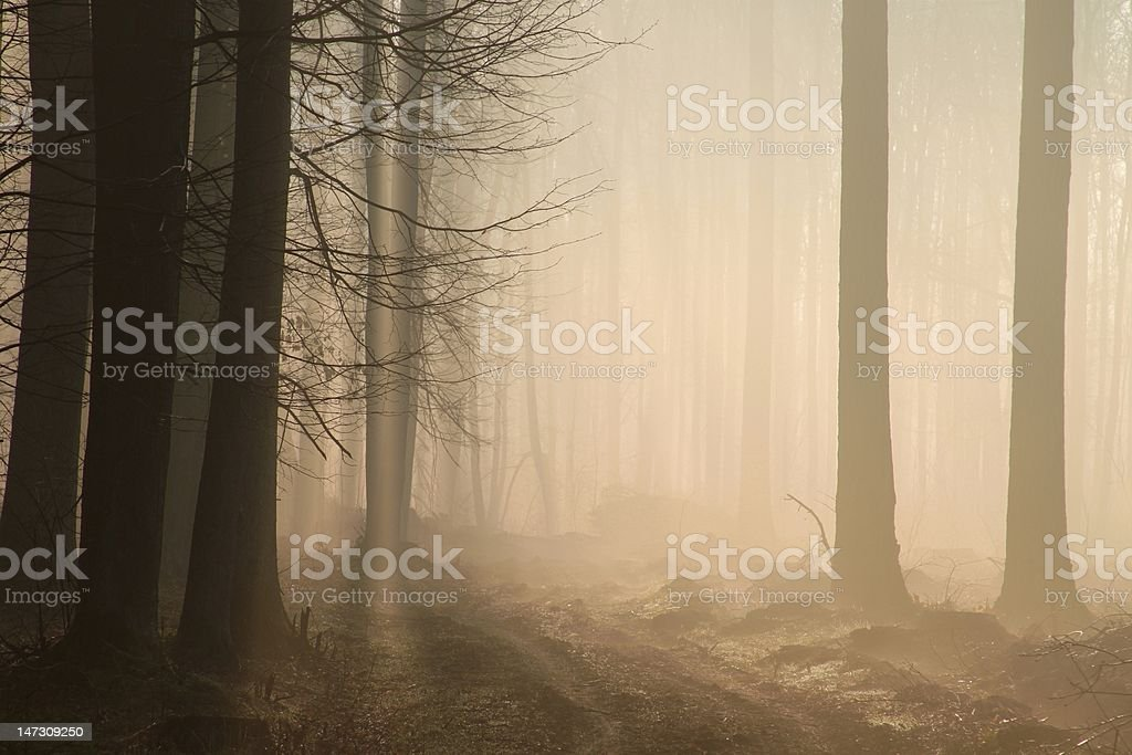Mysterious forest at dawn royalty-free stock photo