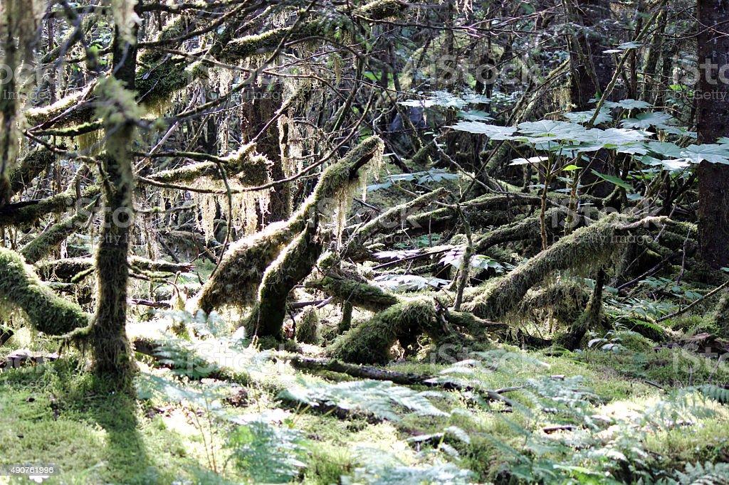 Foresta misteriosa foto stock royalty-free