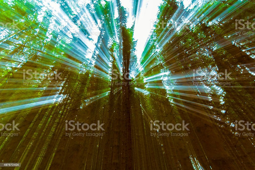 Mysterious Light passing through dark forest stock photo