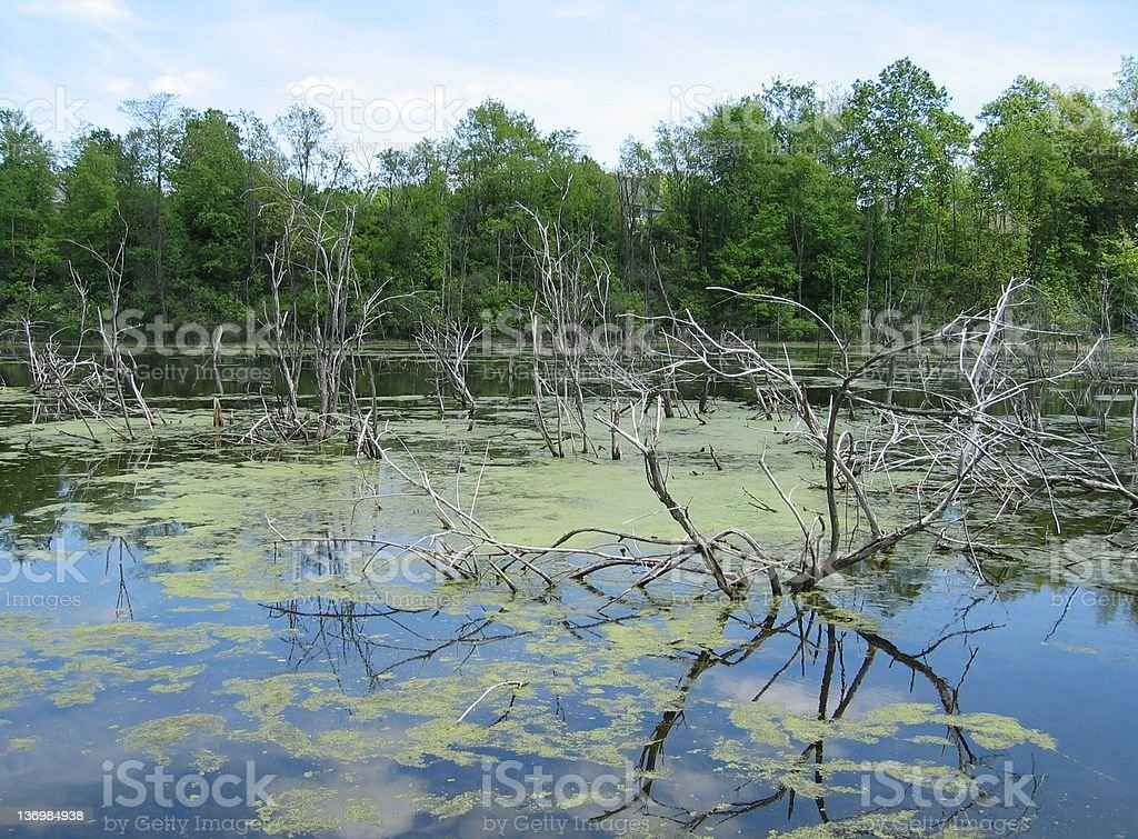 Mysterious Swamp royalty-free stock photo