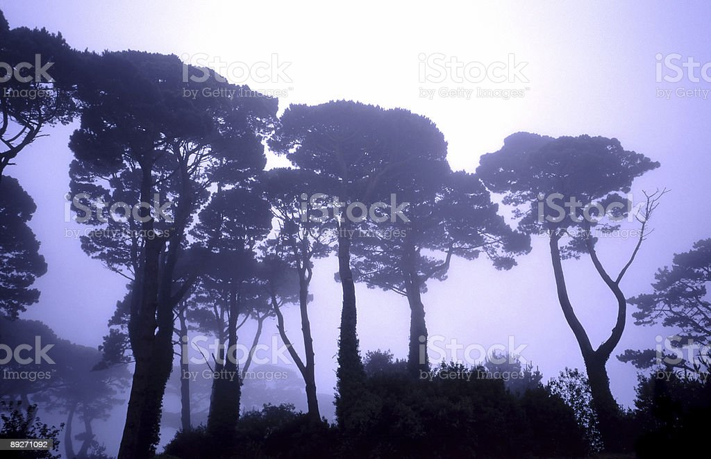 Mysterious Trees royalty-free stock photo