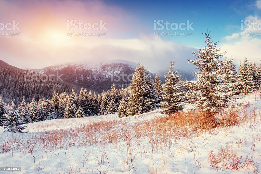 Mysterious Winter landscape with fog, stock photo