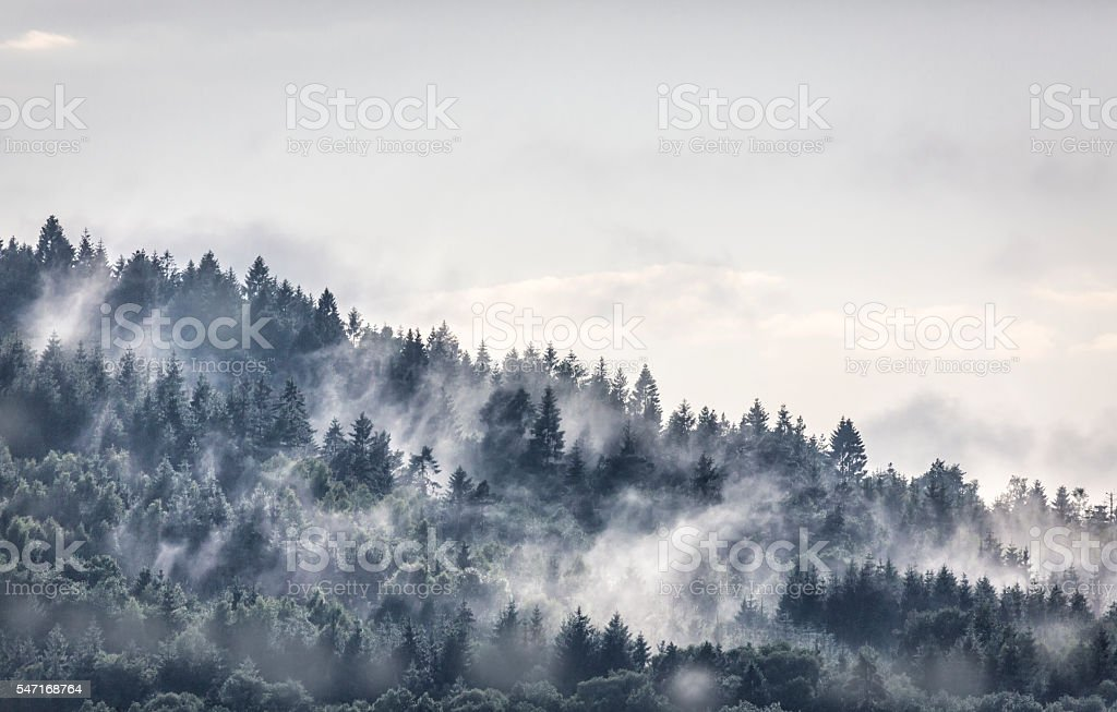 mystery forest stock photo