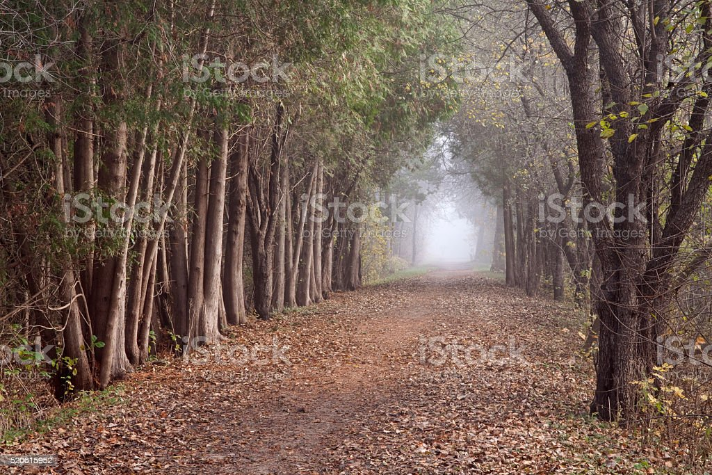 Mystery forest trail stock photo