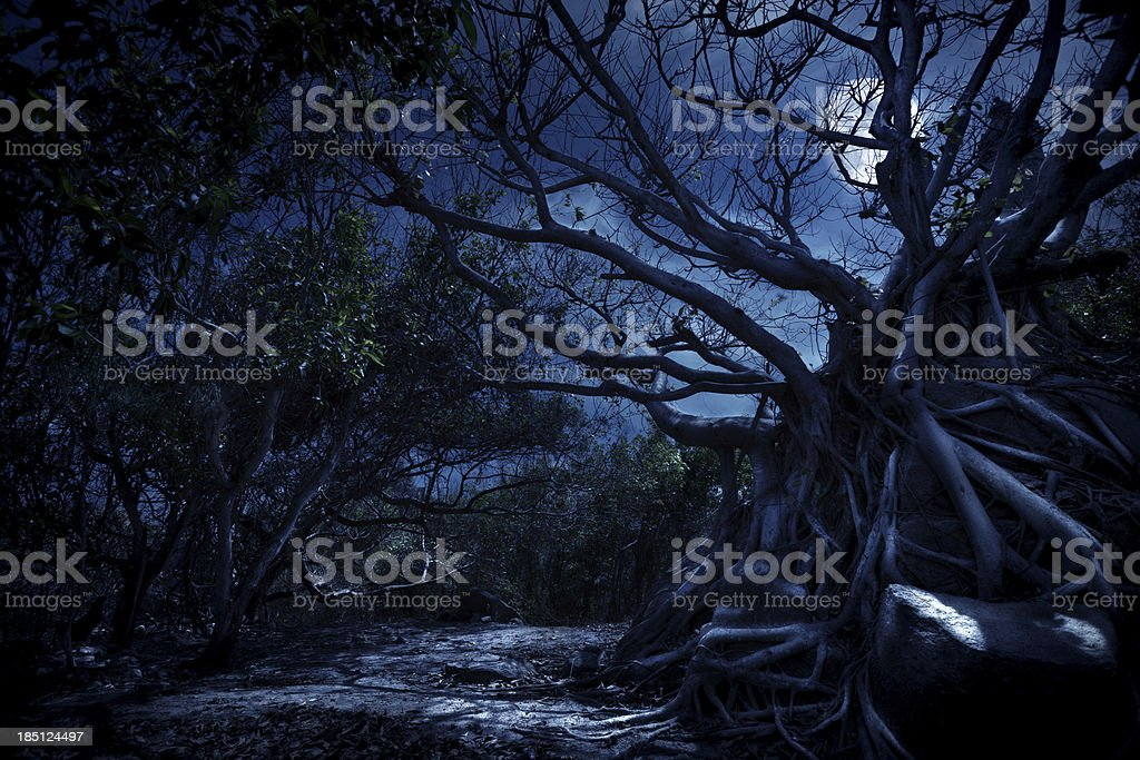 Mystery night royalty-free stock photo