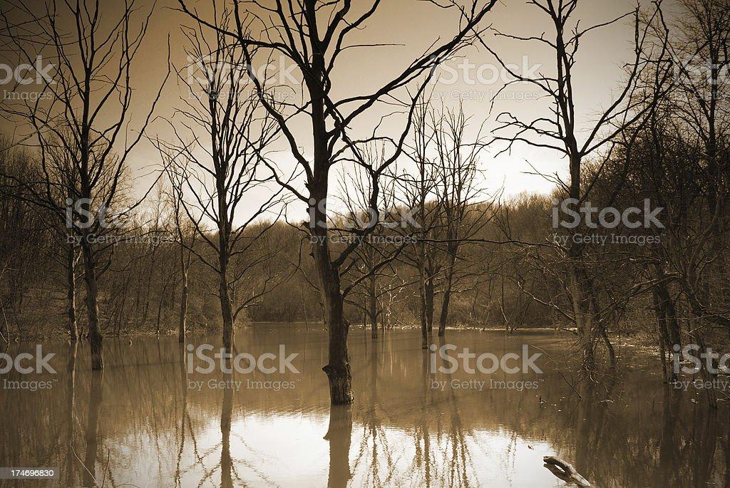 mystery pond royalty-free stock photo