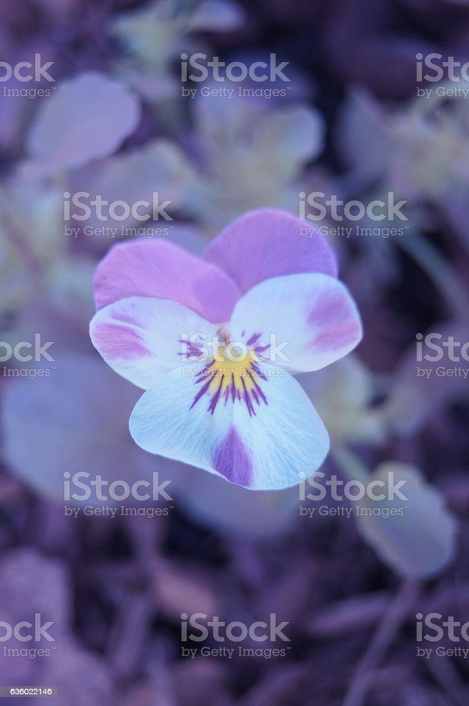 Mystic flower stock photo