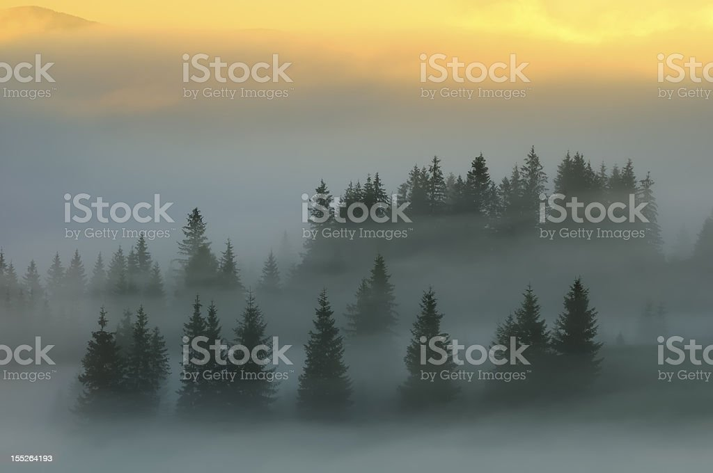 Mystic fog covered trees at dawn in the mountains royalty-free stock photo
