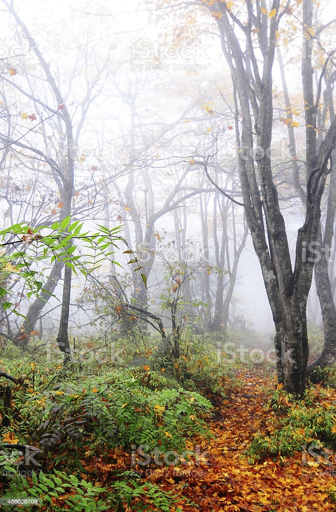 Mystic foggy forest in bright colors stock photo