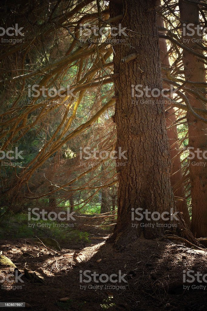 Mystic Forest royalty-free stock photo