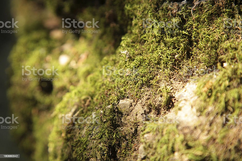 Mystic green in the woods royalty-free stock photo