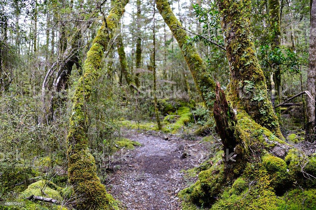 Mystic path royalty-free stock photo