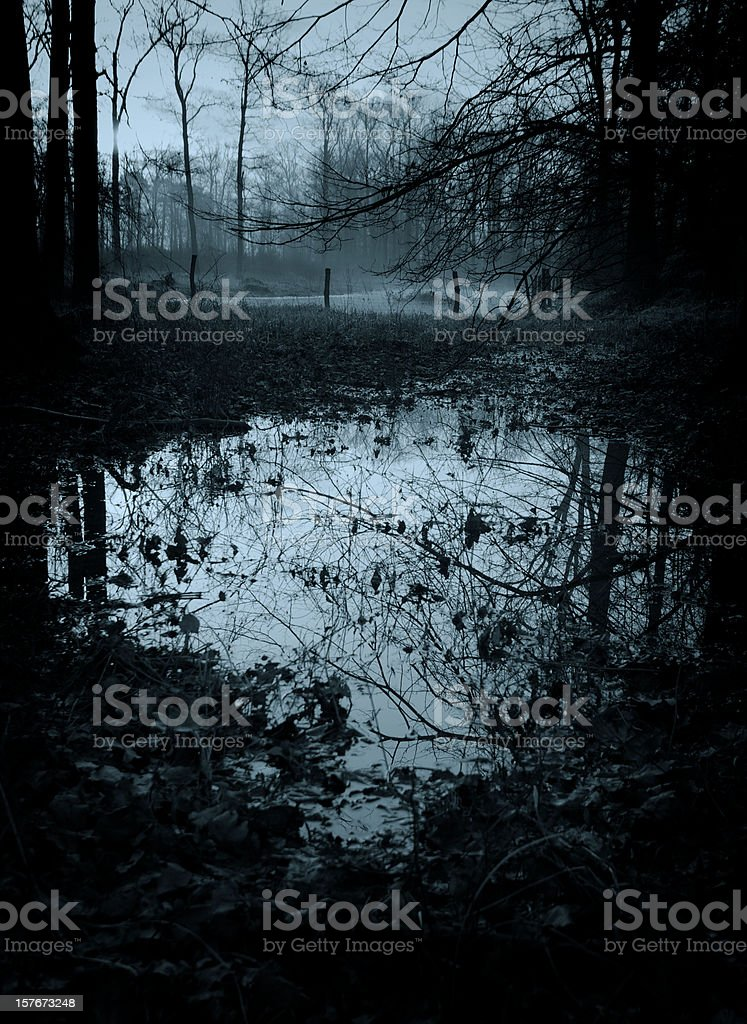 mystic swamp royalty-free stock photo