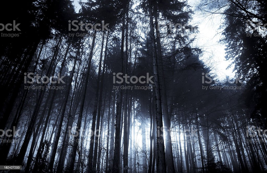 mystic wood stock photo