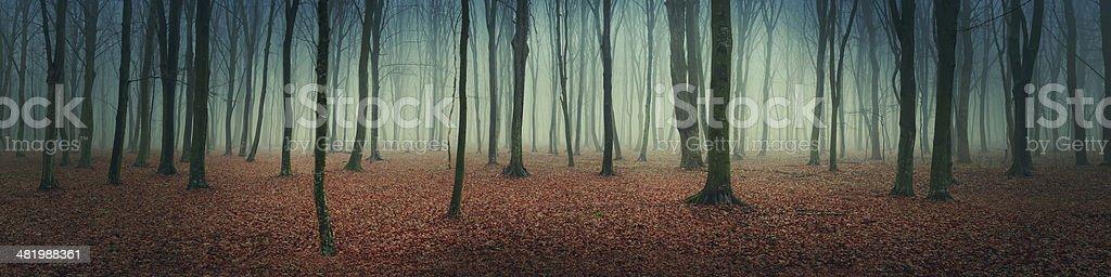 Forêt d'automne mystique photo libre de droits
