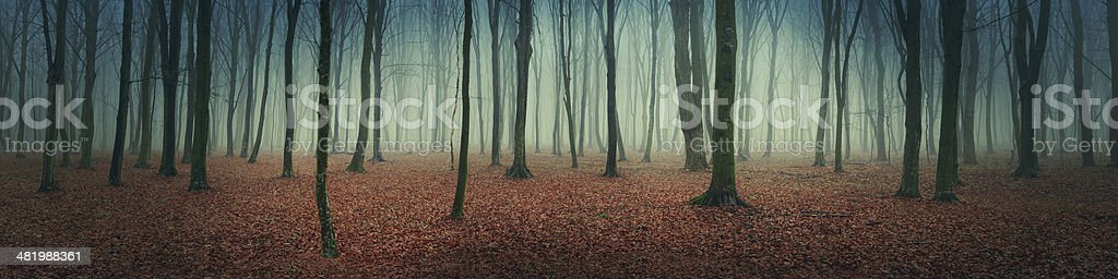 Mystical autumn forest stock photo
