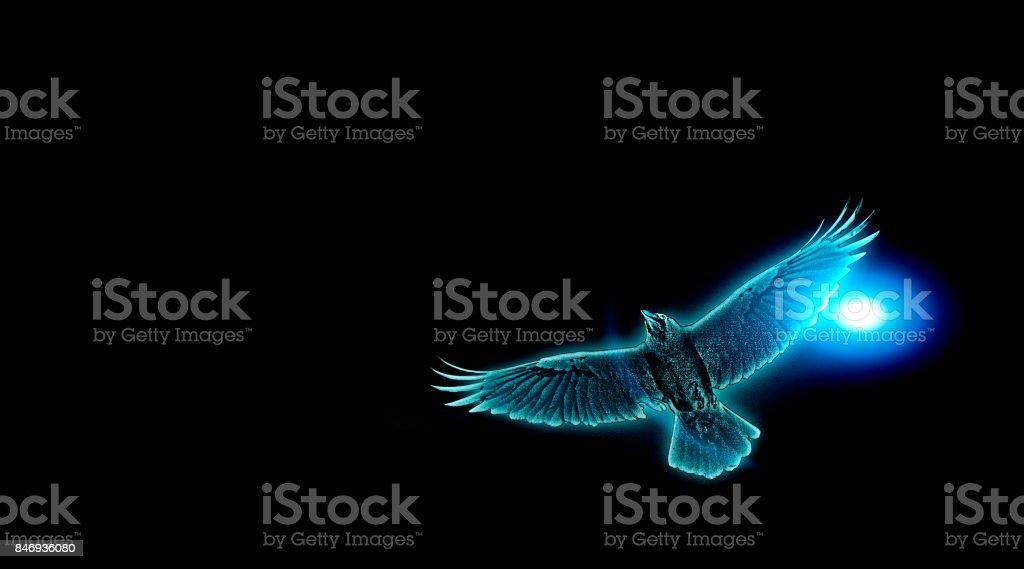 Mystical blue rook in fly with moonlight on black background. stock photo