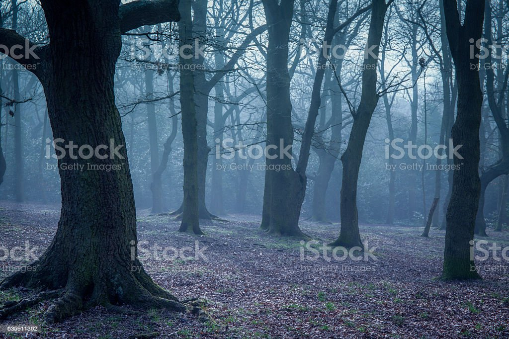 Mystical forest at dawn stock photo