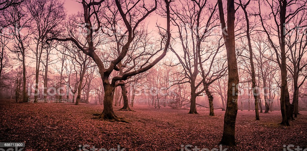 Mystical forest in autumn stock photo