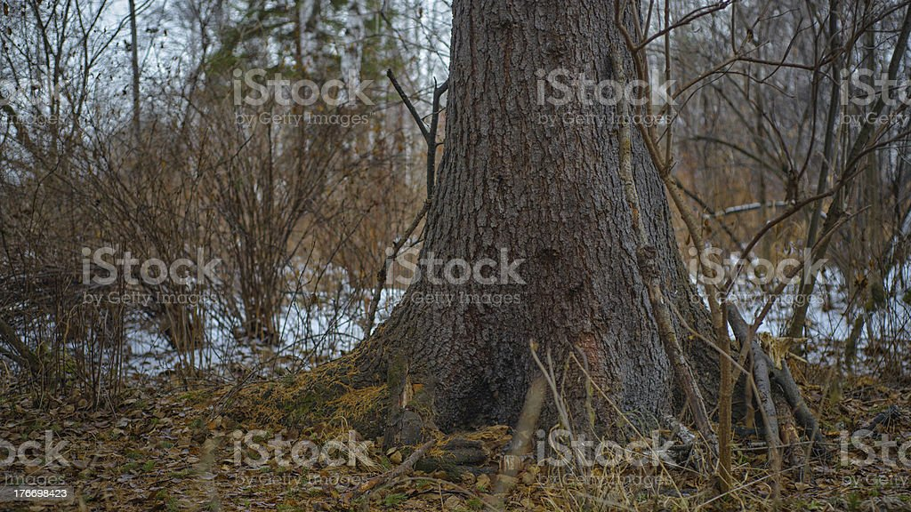 Mystical forest royalty-free stock photo