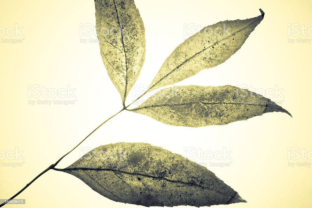 Mystical leaves royalty-free stock photo
