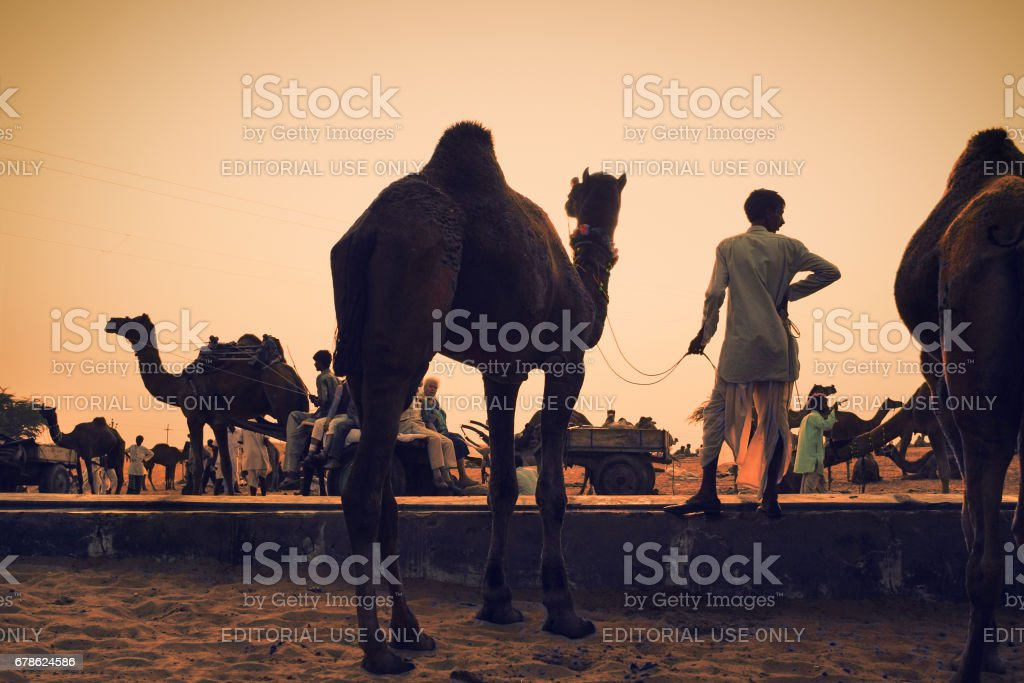 n unidentified cameleer with his camel at Pushkar Camel Fair stock photo