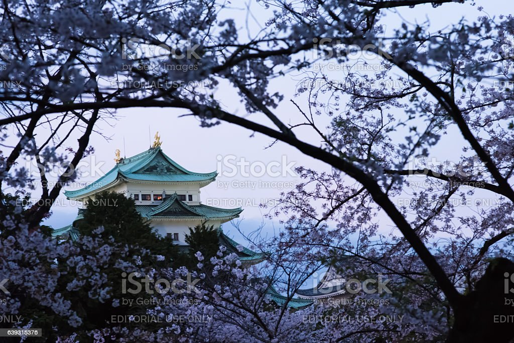 Nagoya castle at dusk and cherry blossoms in full bloom stock photo