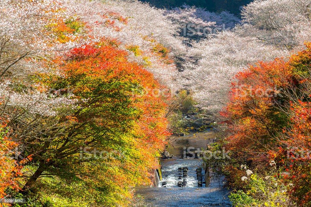 Nagoya, Obara Sakura in autumn stock photo