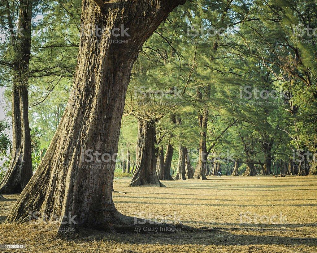 Nai Yang national park royalty-free stock photo
