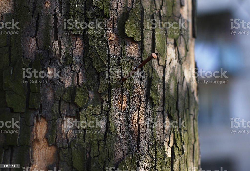 Nail in bark of tree stock photo