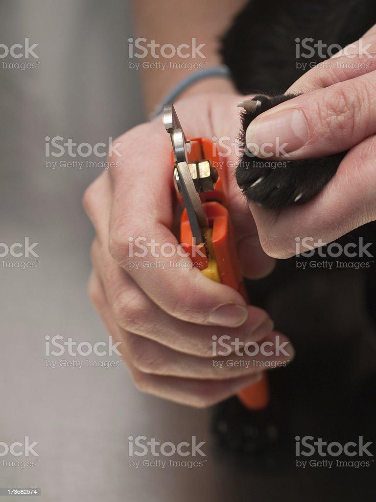 nail trimming royalty-free stock photo