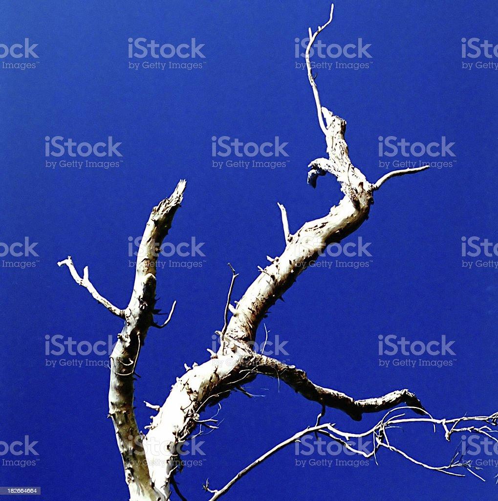 Naked tree on blue royalty-free stock photo