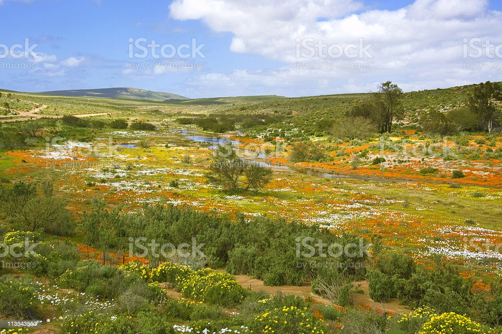 Namaqualand in Spring time stock photo