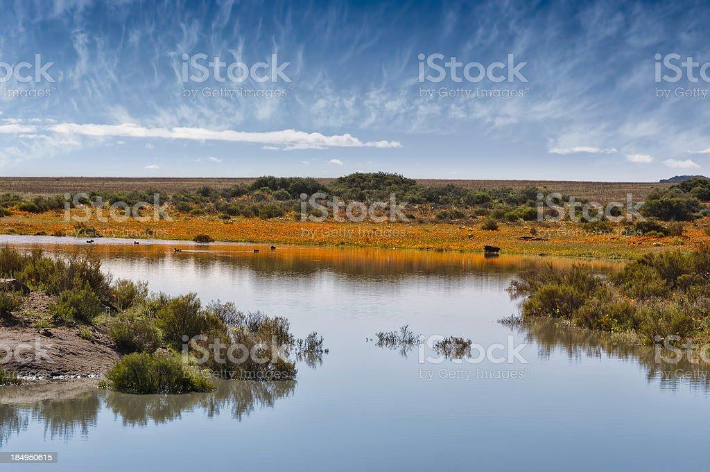 Namaqualand Landscape stock photo