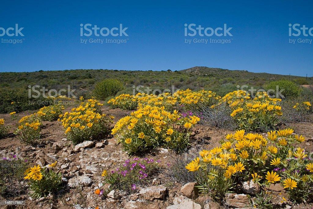 Namaqualand National Park stock photo