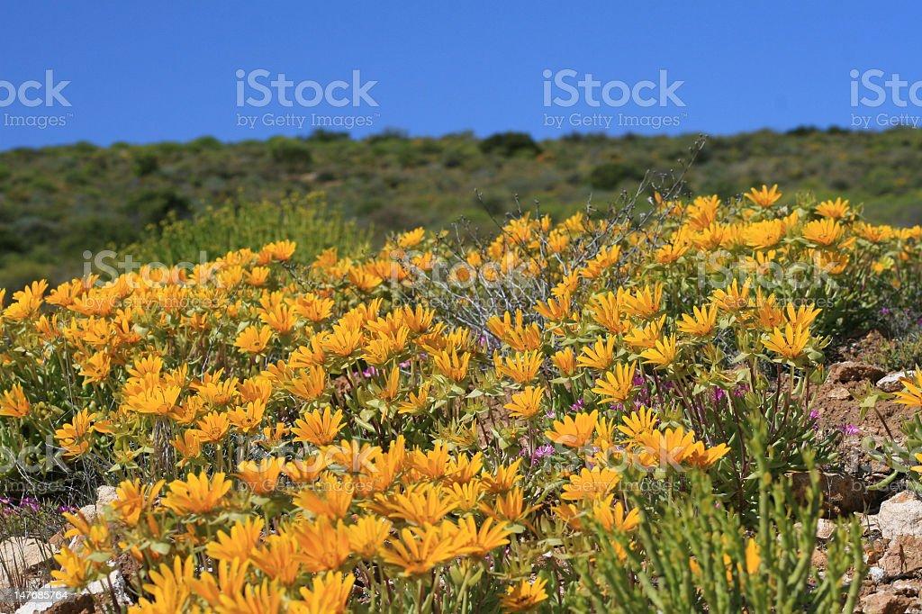 Namaqualand stock photo