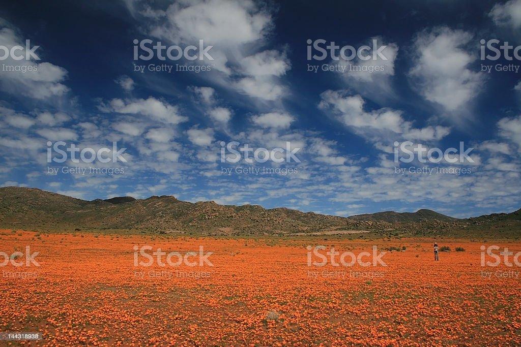 Namaqualand splendor stock photo